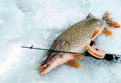 Платная рыбалка в Подмосковье на щуку